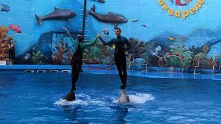 Шоу дельфинов. Алушта. Дельфинарий акварель. 2019 июнь