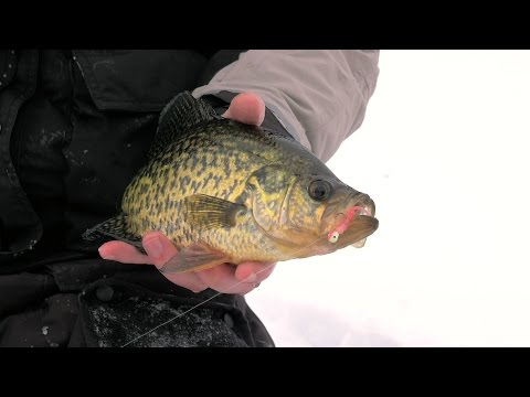 Transitional Crappies - In-Depth Outdoors Season 10, Episode 7
