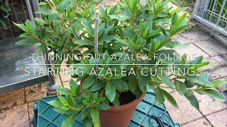 Azalea's How to Prune & Propagate