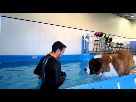 St. Bernard Won't Swim