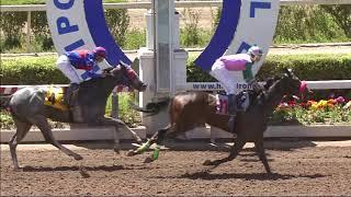 Vidéo de la course PMU PRIX EL BIONICO