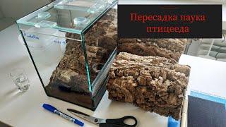 пересадка и подготовка террариума для паука птицееда. От А до Я