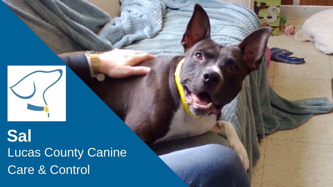 Sal Lucas County Canine Care Conrtol