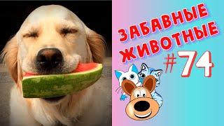 Приколы с Животными #74 / Смешные Животные 2020 / Приколы / Приколы про Животных / Лучшие Приколы