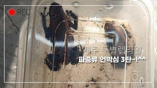 파충류 신규입고 언박싱 3탄!(feat.^^)