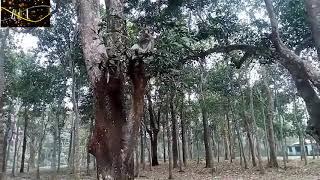 মধুপুর জাতীয় উদ্যান, টাঙ্গাইল / Madhupur National Park / Amazing Beauty of Earth