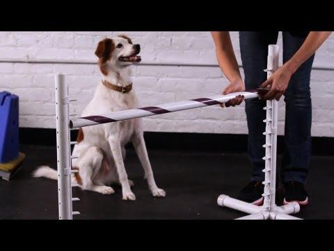 Teach Your Dog to Jump over a Bar | Dog Tricks