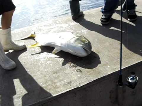 Boynton Inlet Fishing 2