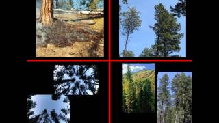 Fuels Management Practices for Ponderosa Pine Dry Mixed Conifer Forests