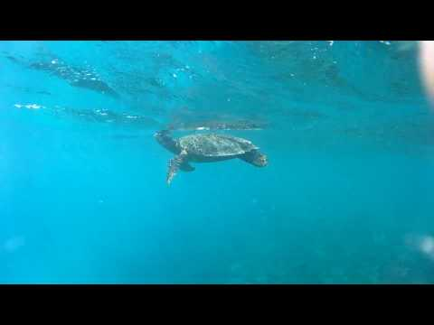 Veligandu, maldives turtle on the house reef