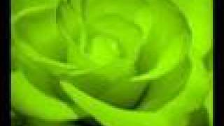 Neil Young - Love Is A Rose