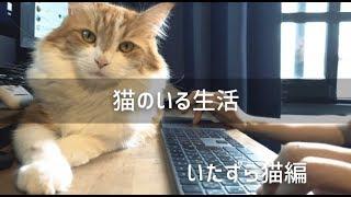 【癒しと】猫との日常【イタズラ被害】