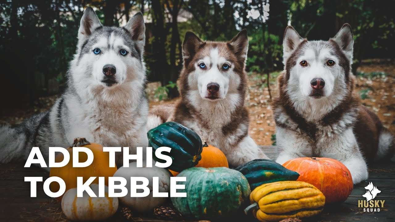 Top 3 Foods For Dogs Feeding Training Husky Squad Youtube