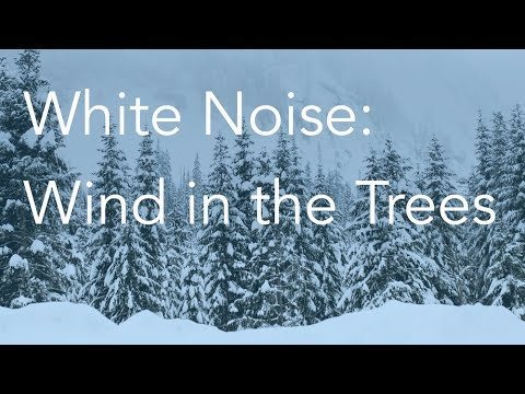 Wind in the Trees | Sounds for Relaxing, Focus or Deep Sleep | Nature White  Noise | 8 Hour Video