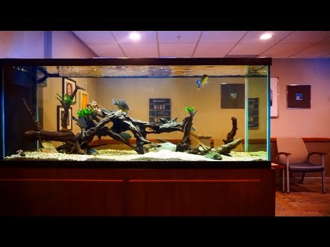 My 350 Gallon Native Fish Tank! - *largemouth, Bowfin, Sunfish*