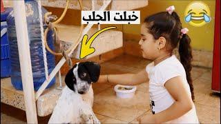 طلبات دانيه تريد تشتري  #الحيوانات كلهه شوفو  شصار طه البغدادي