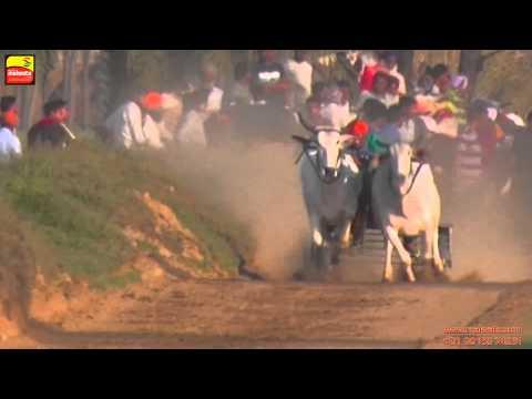 AASSI KALAN (Ludhiana)    Bullock Cart Races - 2015    HD    Part 2nd.