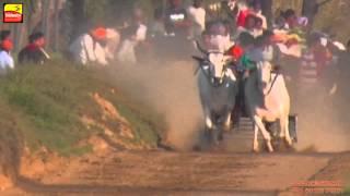 AASSI KALAN (Ludhiana) || Bullock Cart Races - 2015 || HD || Part 2nd.