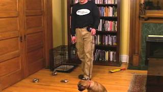 Dog Training Leash Walking - Practice Inside First