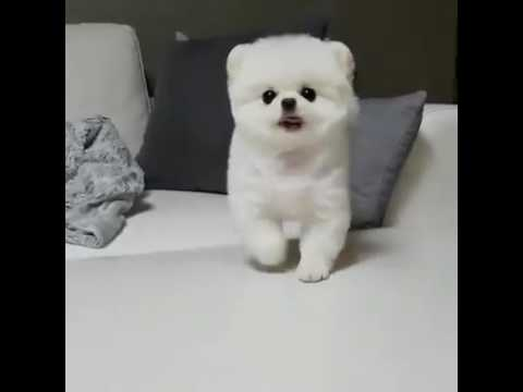 Cutest Dog On Planet Earth Youtube