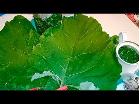 ЛИСТЬЯ ЛОПУХА - НАСТОЯЩАЯ ПАНАЦЕЯ ОТ 1000 БОЛЕЗНЕЙ.3 способа применения листьев лопуха