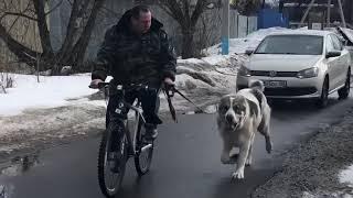 Джихангир АН-НАССИР бежит быстрее автомобиля