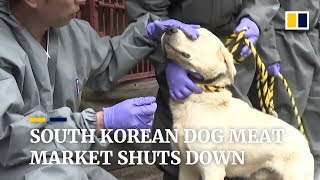 South Korean dog meat market closes after 60 years of gruesome slaughter
