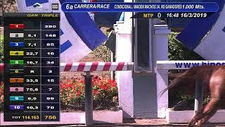 Vidéo de la course PMU PREMIO TAITONTO