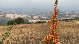Roseto Valfortore, i fondi di Meridaunia fanno rinascere il Villaggio Primavera