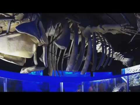 Bone Museum Davao