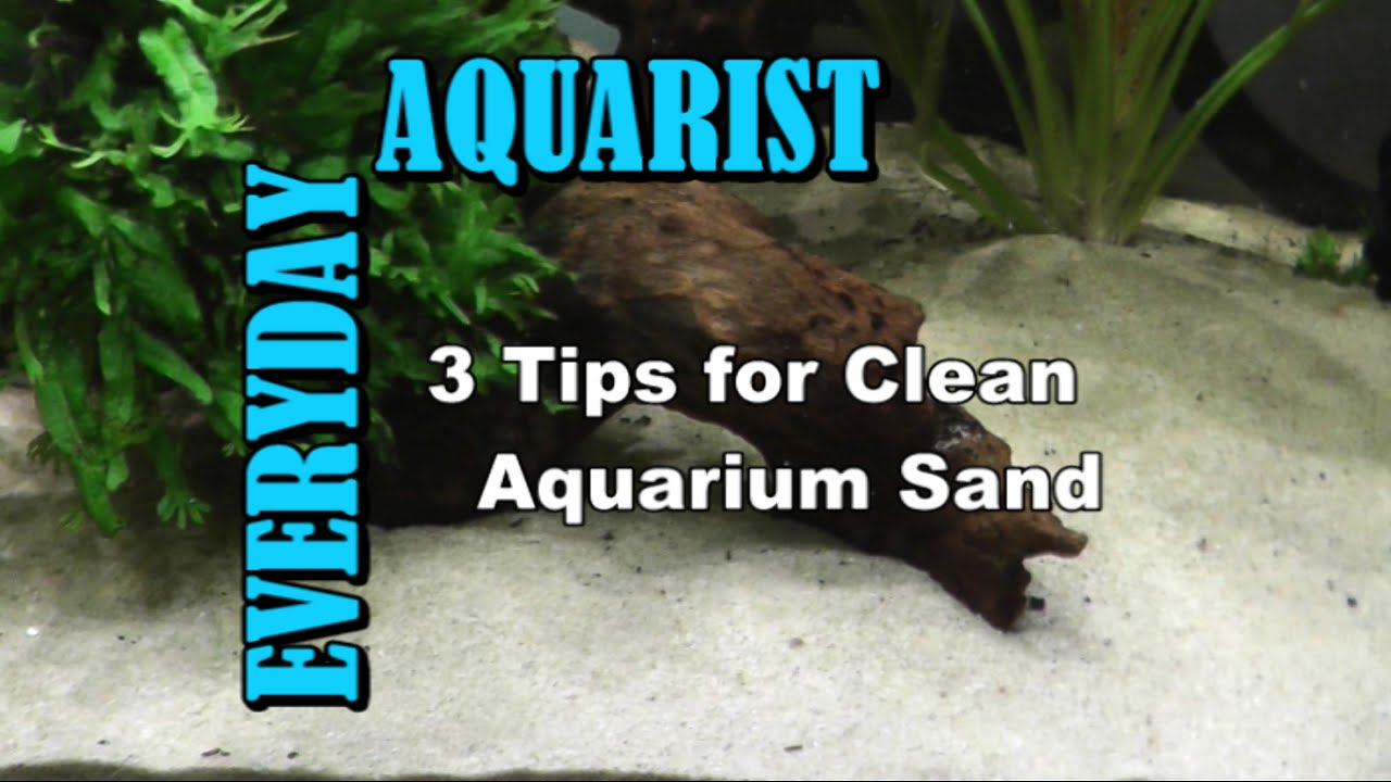 3 tips for clean aquarium sand youtube for How do you clean a fish tank