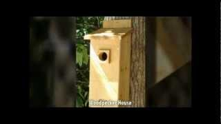 Bird Houses For Sale - Bluebird Houses