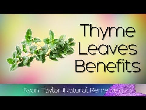 Thyme Leaves: Benefits and Uses