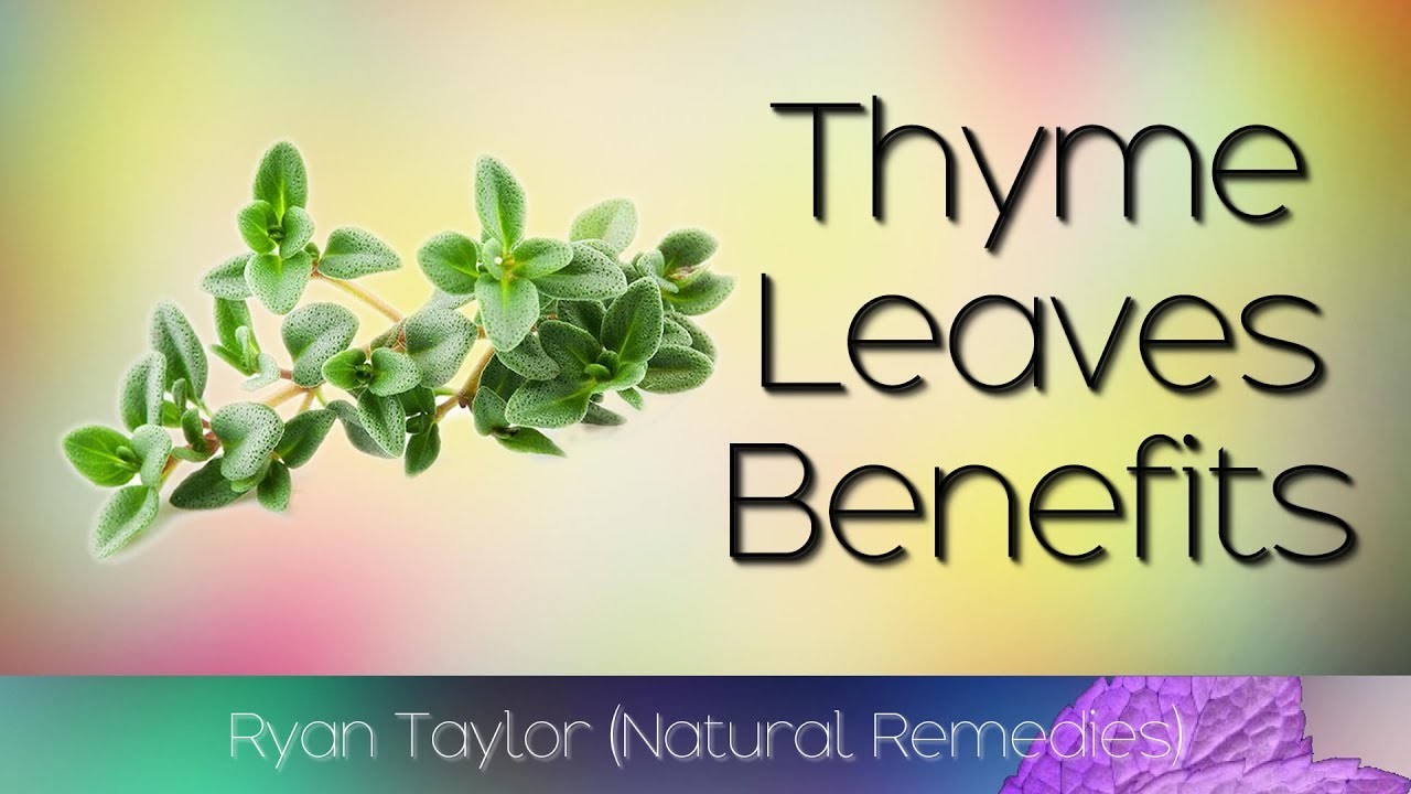 Download Thyme Leaves: Benefits and Uses