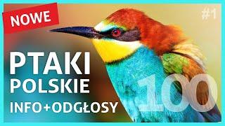 Ptaki Polskie - Nazwy, Wygląd i Śpiew Ptaków cz.1