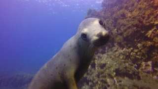 Anacapa Island October 2014 on The Spectre dive boat