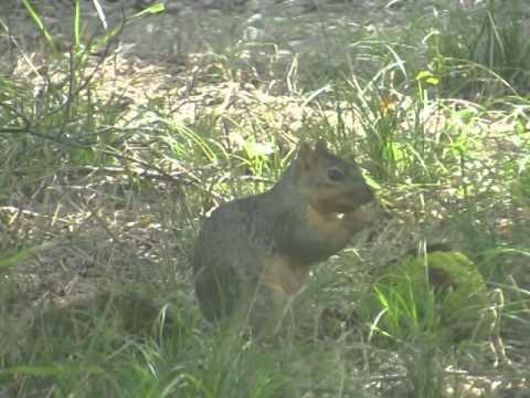 Squirrel Eats Alien's Brain - YouTube