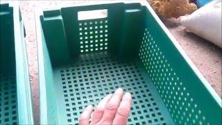 Запуск вермифермы, покупка и заселение червя Ф1(Это мой видеоблог о червивой жизни