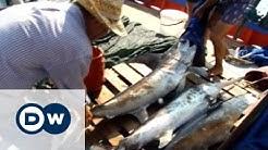 Jagd auf den Schwertfisch | Fokus Europa