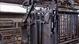 Cage de contention bovine Pearson