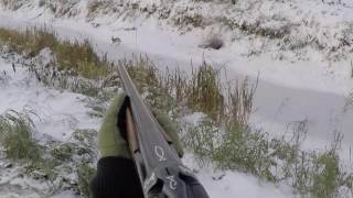 Охота на зайца зимой без собаки