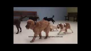 Alpha Doggy Playcare - Melbourne Australia