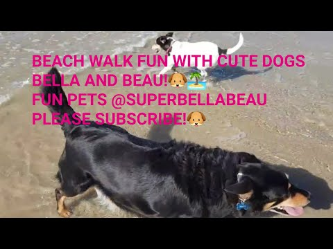 FUN BEACH DAY WITH CUTE DOGS BELLA AND BEAU! 🐶🏝