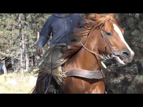 The Great Outdoors: Custer State Park, South Dakota