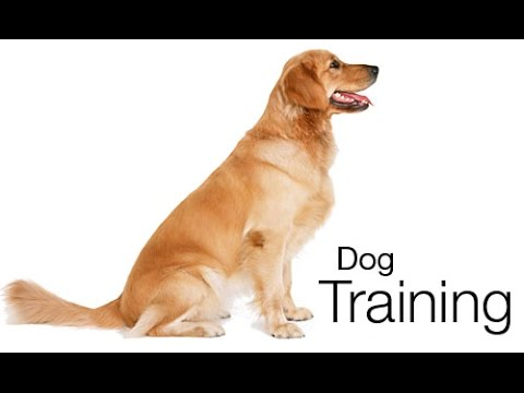 best dog training books 2015 - Best Dog Training Books For Beginners