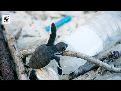 The Danger of Plastic Pollution | WWF-Australia