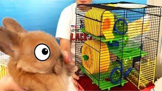 Клетка для хомяка. Кролик Баффи и КО.