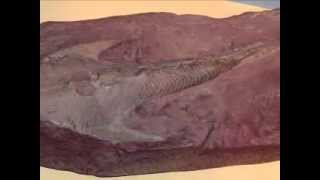 Blastoids- Paleozoic Extinct Echinoderms