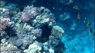 Великолепный домашний риф в отеле Sheraton Sharm Hotel Resort Villas And Spa