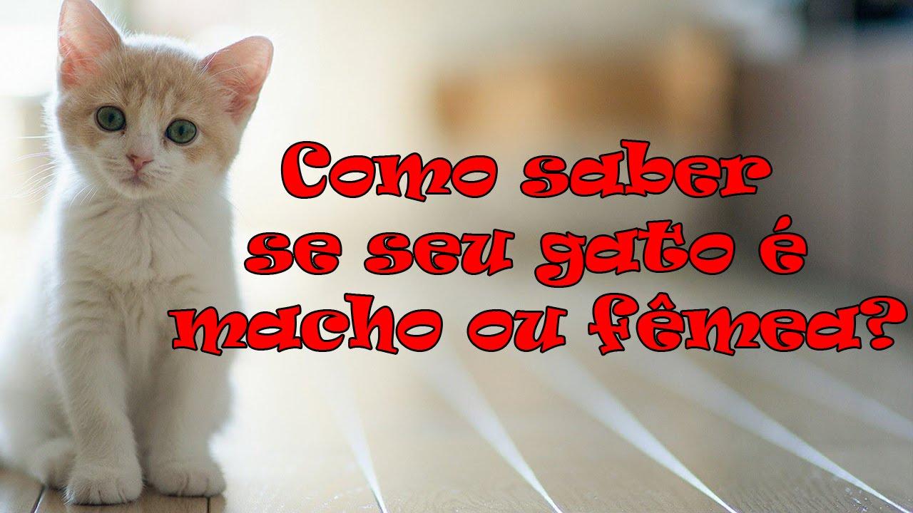 Como Saber Se O Beber Encaixou: Como Saber Se O Seu Gato é Macho Ou Femea. #35